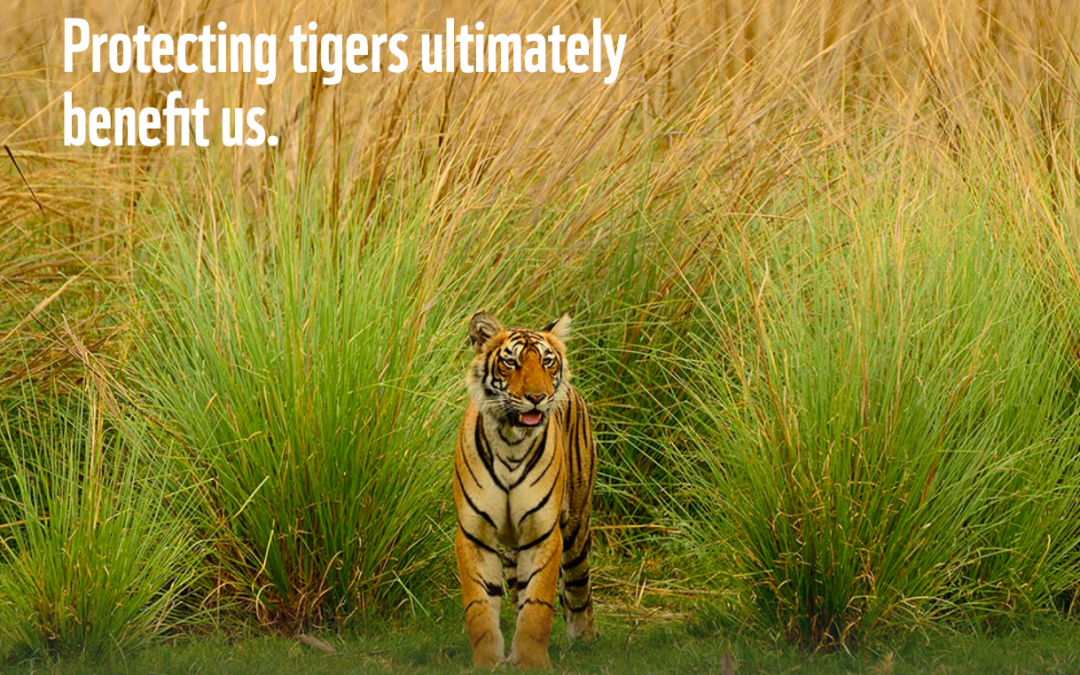 Happy Global Tiger Day!