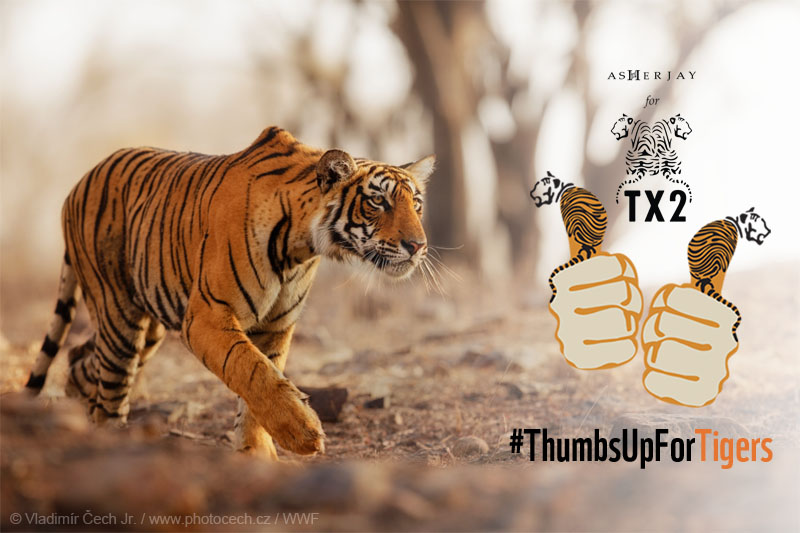 Ajitora Joins WWF in Celebrating Global Tiger Day with #‎ThumbsUpForTigers!