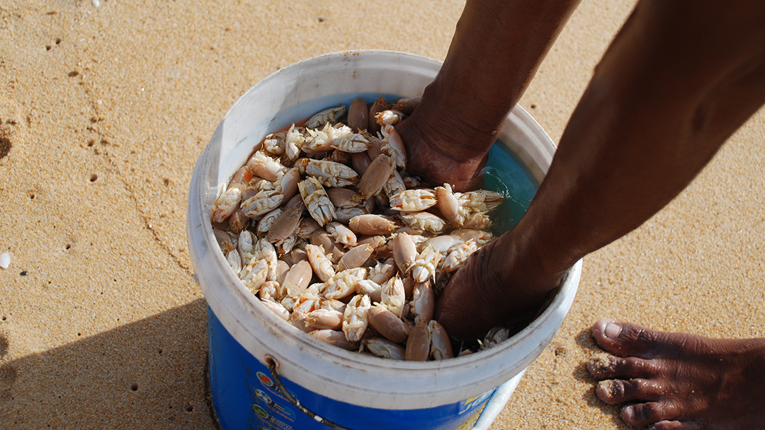 Shellfishing on beach in Phuket