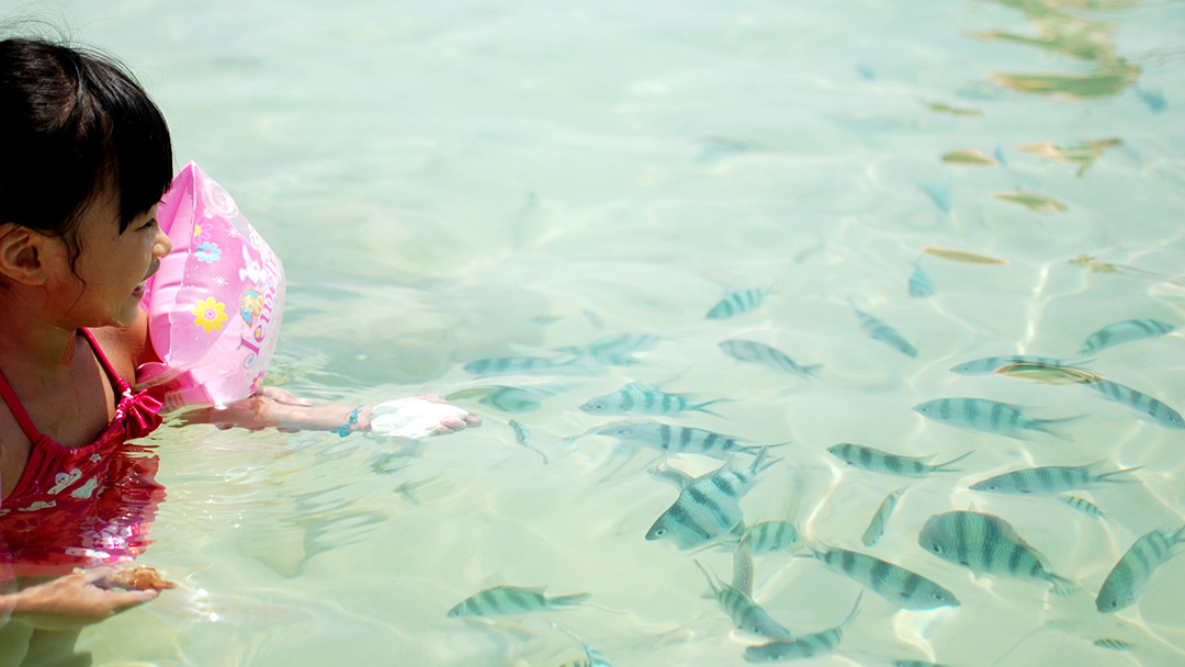 Swimming with schools of fish in Sabah